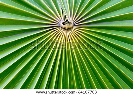 palm leave - stock photo