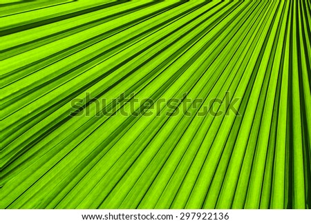 Palm leave texture for use a background - stock photo