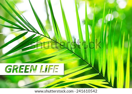 Palm leaves close-up, Green Life concept - stock photo