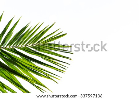 Palm leaves isolated on white - stock photo