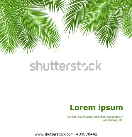 Palm leaves isolated on white background.  - stock photo
