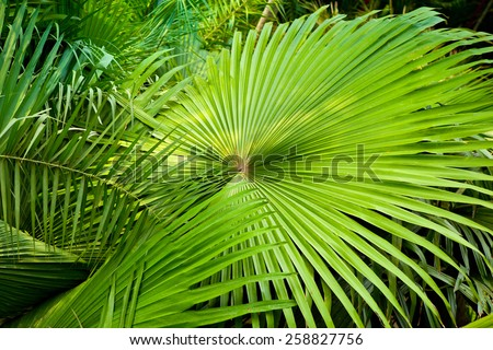 palm leaves macro green leaves background - stock photo