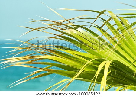 Palm leaves on background of the ocean. Close up - stock photo