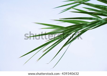 Palm leaves on blue sky background - stock photo