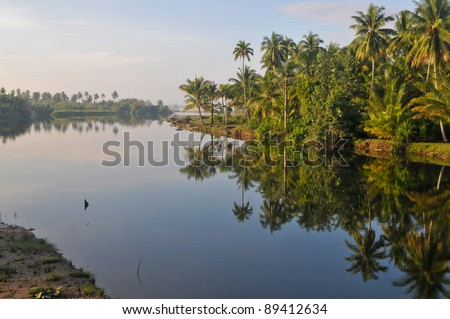 Palm lined river with reflection in sumatra