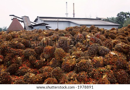 palm oil factory - stock photo