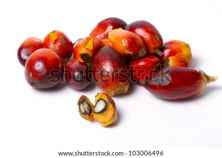 palm oil fruit. - stock photo