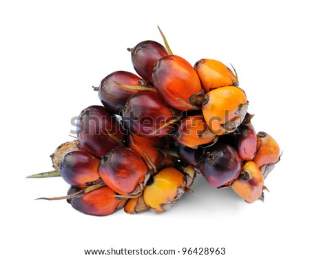 Palm Oil fruits isolated against white background, selective focus. - stock photo