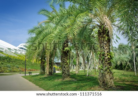 Palm oil tree at Gardens by the Bay in Singapore. - stock photo