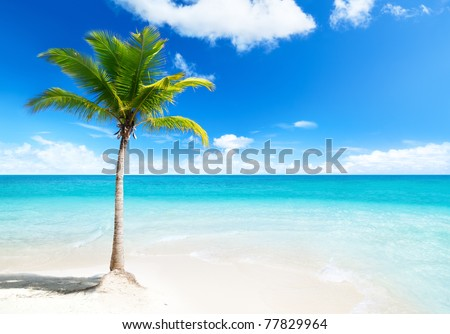 palm on island - stock photo