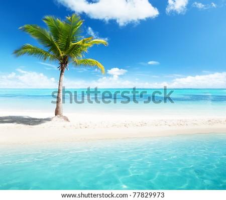 palm on island - stock photo
