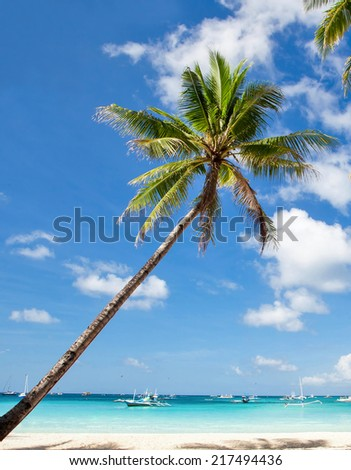 Palm on tropical beach, Philippines, Boracay - stock photo