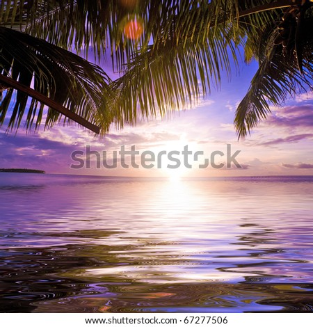 Palm Outdoor Beauty - stock photo
