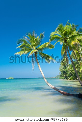 Palm Panorama Beautiful Beach - stock photo