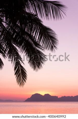 Palm Paradise Evening Scene  - stock photo