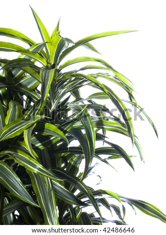 Palm plant in the flowerpot isolated on white - stock photo
