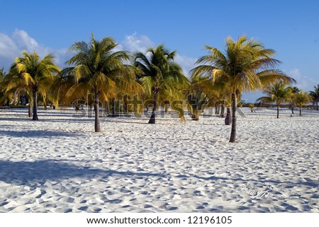Palm's on the sand on Cuba Cayo Largo, paradise tropical island on evening