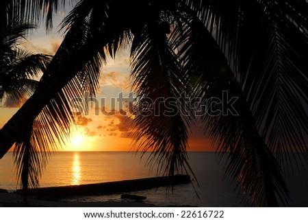 Palm silhouettes at sunset at Maria la Gorda beach in Cuba - stock photo