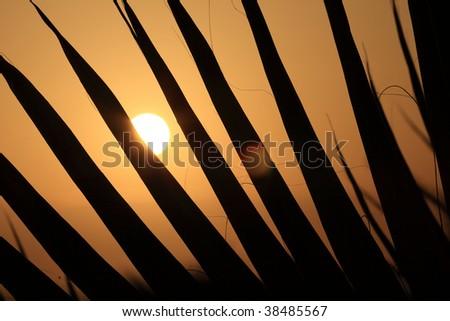 Palm sunset - stock photo