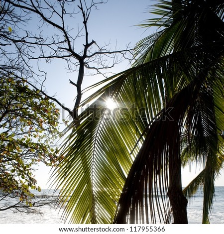Palm tree against Costa Rica sky - stock photo