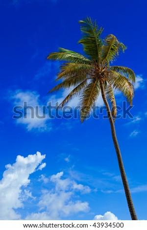 Palm tree against the blue skies of the Caribbean - stock photo