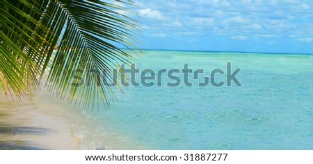 palm tree along the beach of beautiful tropical water and sky great for a  backdrop with copy space - stock photo