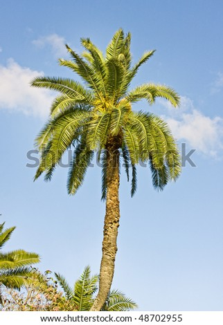 Palm tree and blue sky, beautiful outdoor tropical scene