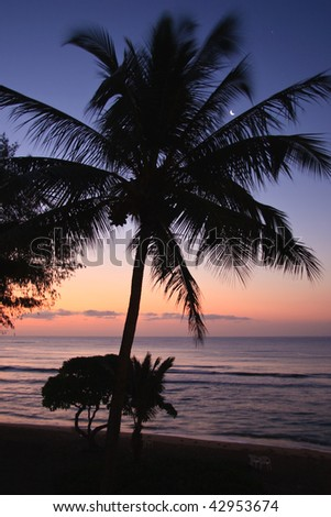 Palm tree and morning glow of sunrise