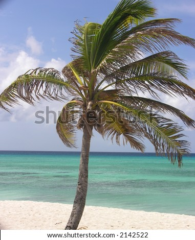Palm Tree at Beach