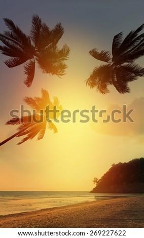 Palm tree at sunset on california - USA - stock photo