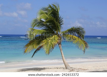 Palm tree at the beach - stock photo