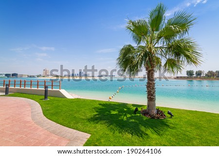 Palm tree at the beach in Abu Dhabi, United Arab Emirates - stock photo