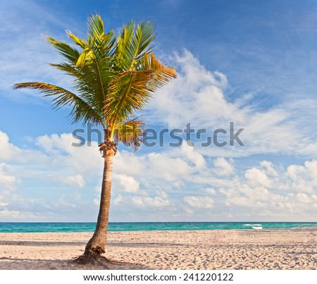 Palm tree at the beach in Miami Florida USA, on a beautiful summer day with blue sky and ocean in the background - stock photo