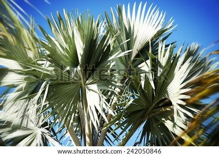 Palm tree background - stock photo