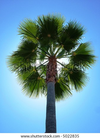 Palm Tree, backlit with sun - stock photo