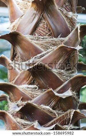 Palm tree bark - stock photo