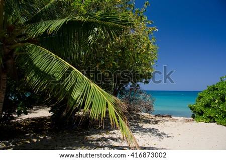 Palm tree branch at entry to Puako Beach, Big Island, Hawaii - stock photo