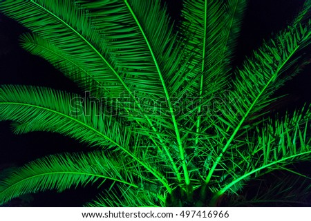 Palm tree branches and leaves at night