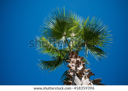 Palm tree close up isolated on the blue sky - stock photo