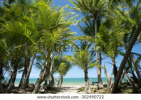 Palm tree,Cowley Beach, Cardwell, Great Barrier Reef, Australia -5 - stock photo