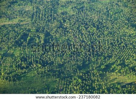 Palm tree forest, Tonga - stock photo