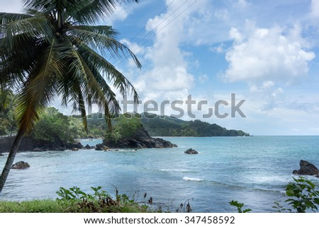 Palm tree growing on the coast, Trinidad And Tobago