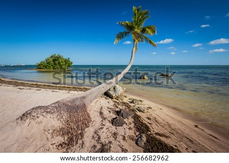Palm tree grows out over bridge - stock photo