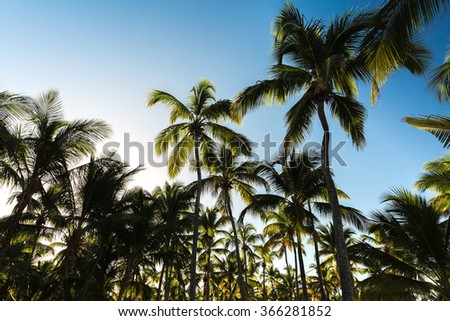 Palm tree in a sunny day - stock photo