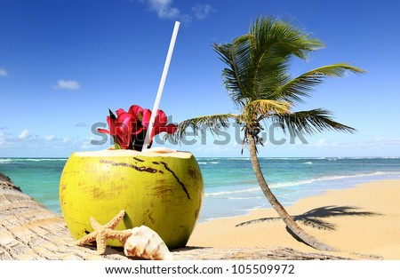 palm tree in a tropical beach on a sunny day - stock photo
