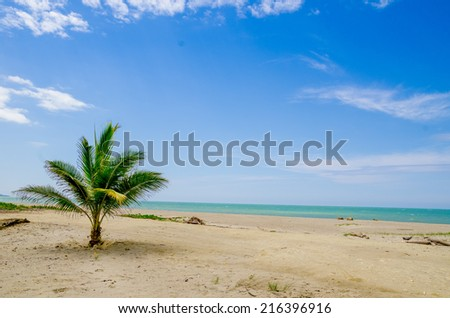 palm tree in beautiful tropical deserted beach in the coast of ecuador - stock photo