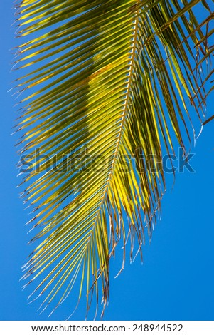 Palm tree in Cairns, Australia. - stock photo