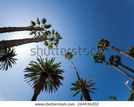 Palm Tree in California - stock photo