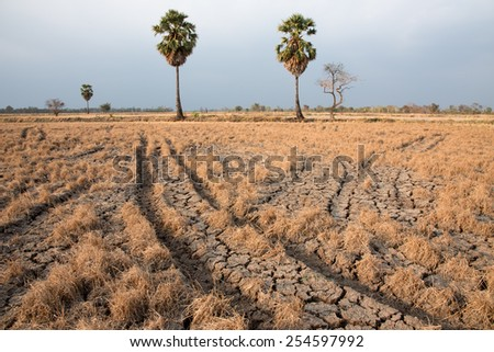 Palm tree in dry land