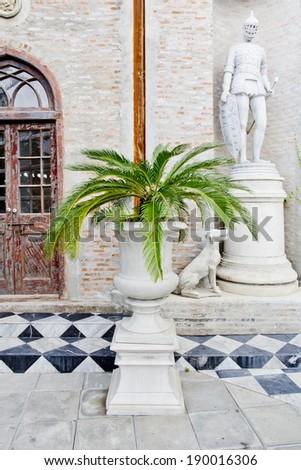 palm tree in flowerpot - stock photo